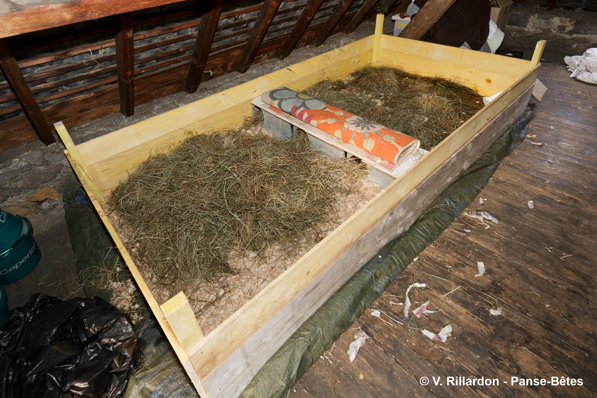 Hibernarium pour hérissons d'Europe